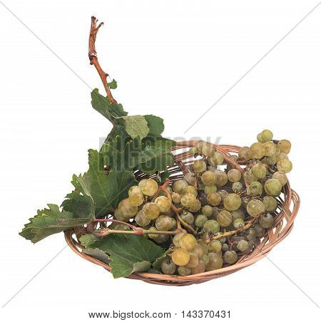 wild grapes on the plate isolated on the white background