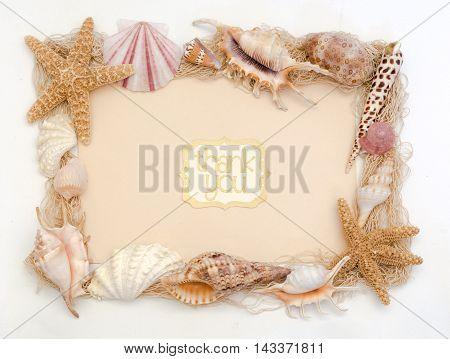 Beach Shells Thank You Card Stationery Greeting