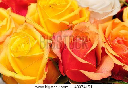 Bouqet of beautifuly yellow and orange roses