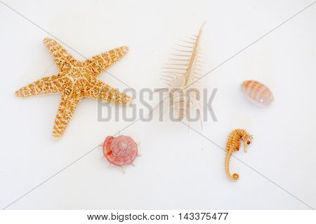 Various types of sea shells sea star and sea horse on a light background