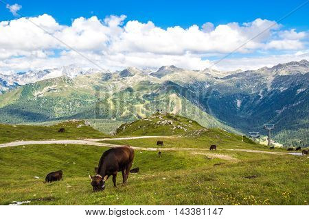 Panoramic view of the Alps with a herd of cattle grazing.