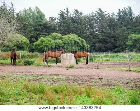paddock with some horses in Brittany france
