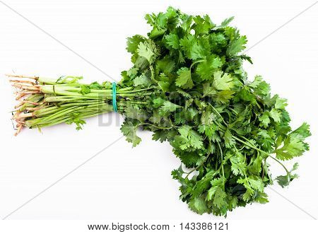 Bunch Of Fresh Cut Green Coriander Herb On White