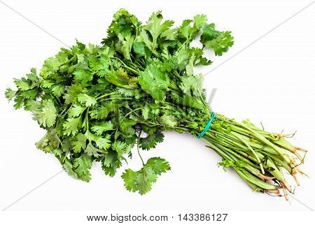 Bunch Of Fresh Cut Green Cilantro Herb On White