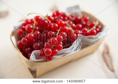 freshly harvested red currants in a box
