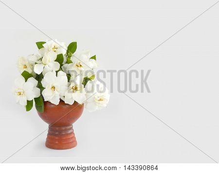 Beautiful white gardenia flower on white background