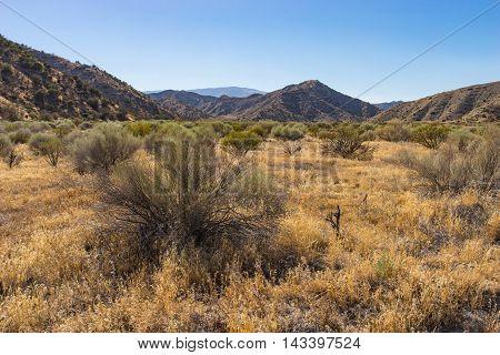 Southern California Savanna Land