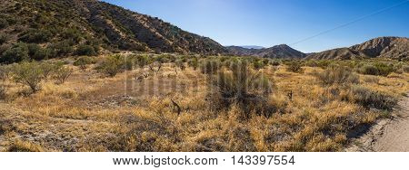 California Savanna Grassland
