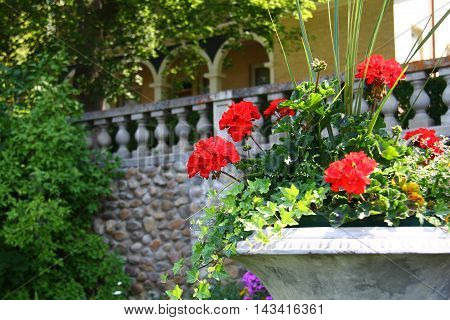flowers on a staircase in an old mansion