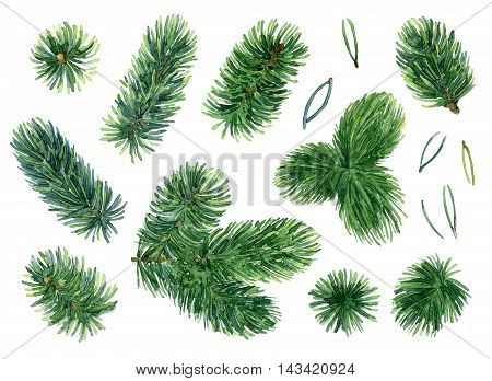 Bright green branches of spruce. Set of elements. Watercolor illustration