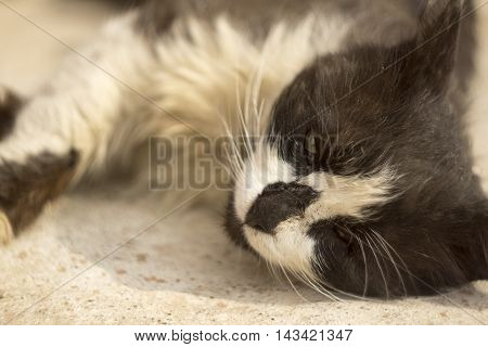 Lonely sick homeless cat with one eye