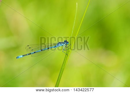 a beautiful image in detail with an insect. a beautiful dragonfly that impresses with surprising perfection that