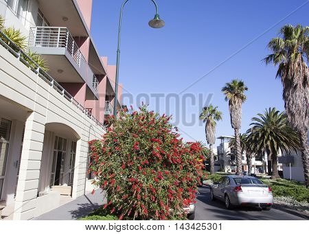 Sunny street of residential district in Melbourne (Australia).
