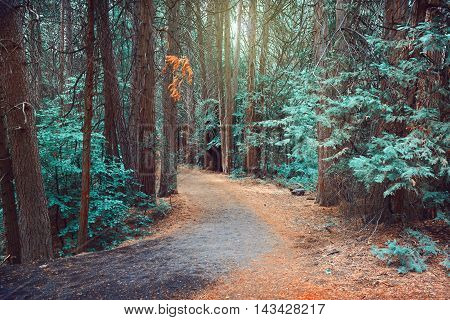 Magical dreamy forest background with pine trees