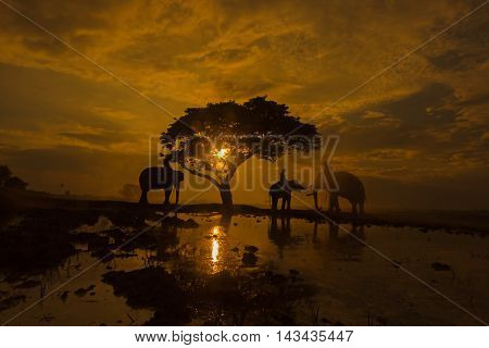 Silhouettes of elephants in rural at sunset.