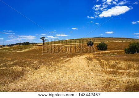 Australian Outback Field Landscape