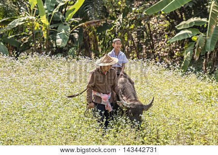 Children riding on a the Buffalo in the field.