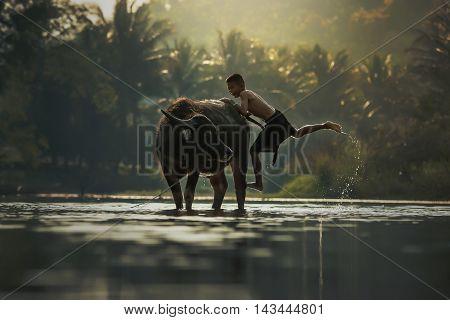 Children riding on a buffalo in rural Thailand.