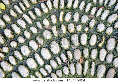 Mossy pebbles. Background texture of the old gravel surface.