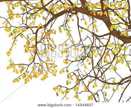 Ilustración de ramas y hojas de otoño