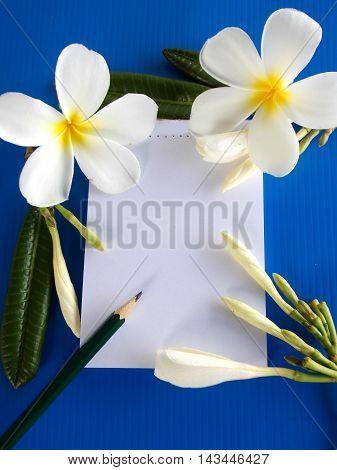 Beautiful white frangipani with notepad on blue background