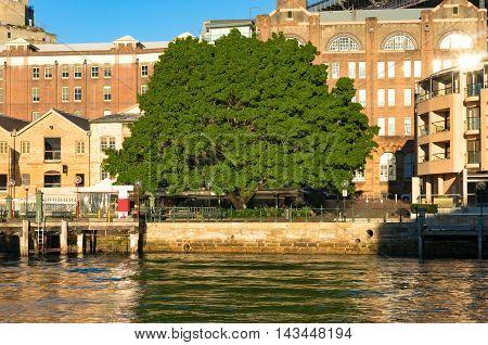 Green Tree Near Campbell's Cove Jetty, Sydney