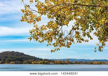 Branch With Yellow Leaves And Blue Lake On The Background