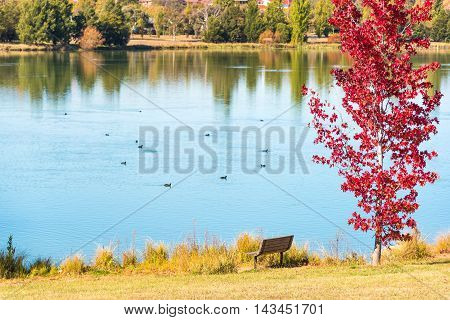 Autumn Park With Pond And Red Maple