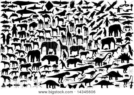 Diverse set of animal outlines (vector file also available)