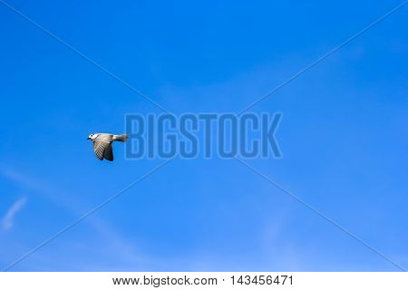 the seagull fly in the blue sky