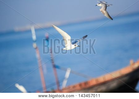 two seagulls fly near the boat among the sea