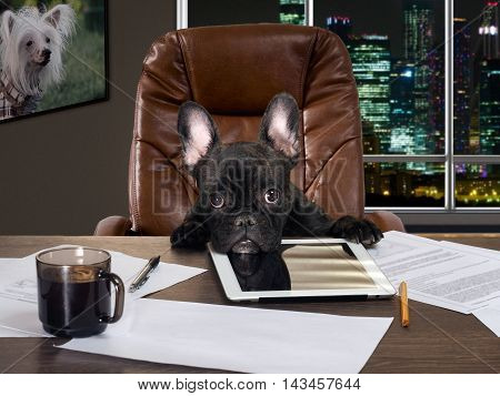 The dog in the office behind a desk. Cabinet computer paper and cup of coffee. Bulldog - boss at the table. Business concept pet head of the company the boss