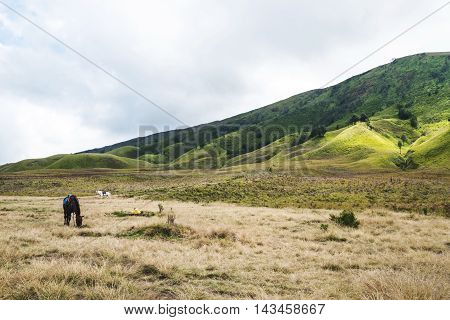 Landscape, Savanna grassland and hills, with horses in Indonesia