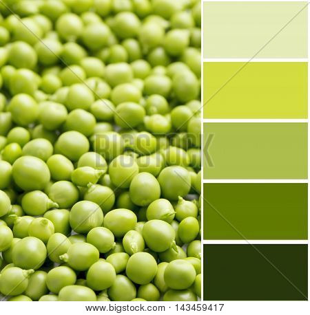 Fresh Green Peas Background With Color Palette