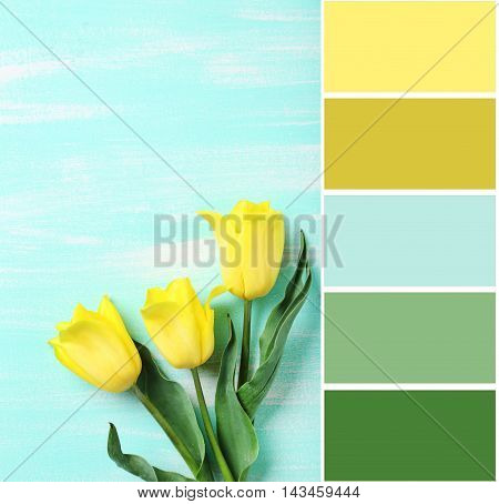 Color Palette With Bouquet Of Yellow Tulips On A Mint Wooden Table