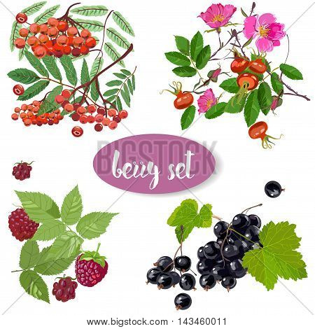 set with summer berry - briar, currant, rowan and raspberries