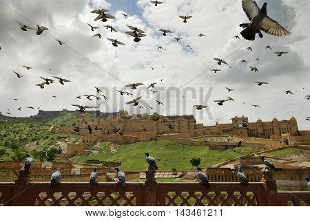 Hundreds of pigeons take flight in front of the famed Amber Fort of Jaipur