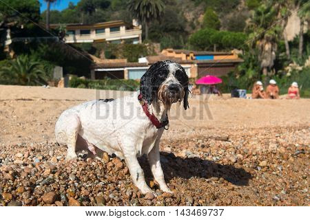 Swimming dog at the beach