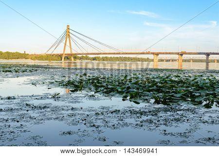 View Of The Moskovsky  Bridge In Kiev