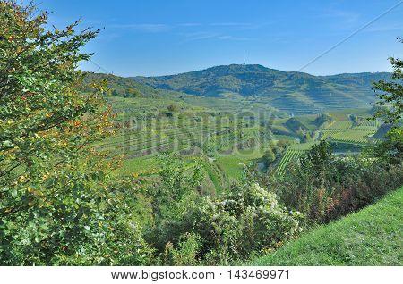Vineyard Landscape at Kaiserstuhl Wine region in Black Forest,Germany