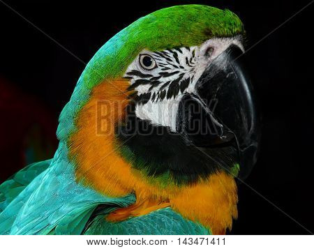 a beautiful picture with a parrot. I can see a lot of colors in feathers. a gorgeous bird