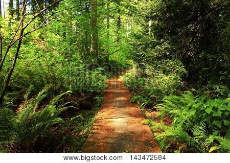a picture of an exterior PacificNorthwest forest hiking trail