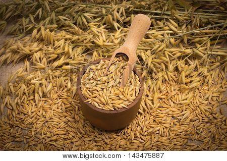 diet supplements - oat grain. Close up.