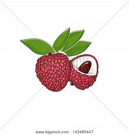 Lichee Isolated on White, Tropical Fruit Lichi ,Vector Illustration
