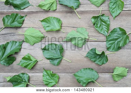 Green Leaves of Mulberry disrupted on brown wooden background for design concept of nature.