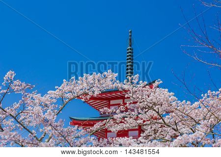 Material obtained by photographing the cherry tree and the pagoda.
