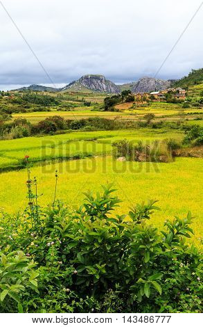 Rice Fields With Rock Formation And Village In The Background On A Grey Cloudy Day