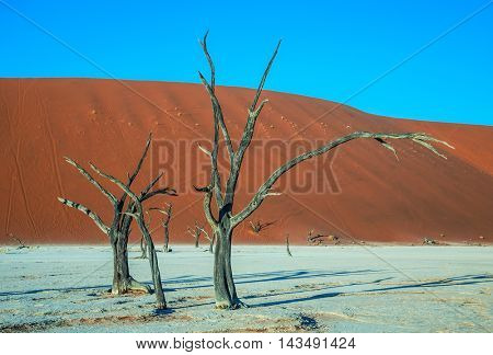 The concept of exotic travel. Orange sand dunes around the dried up lake. Picturesque dry trees covered sunset