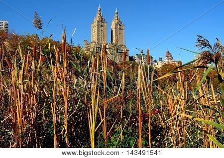 New York City - November 3 2015: Cat O'NineTail stalks at the edge of the Central Park boating lake and San Remo Apartment towers on Central Park West *