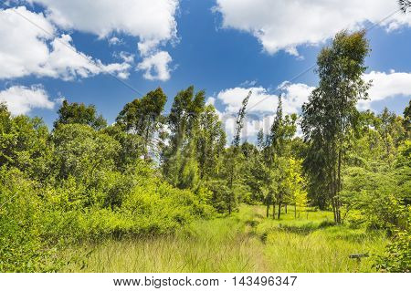 Path Thorugh Karura Forest In Nairobi, Kenya